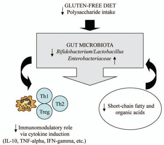 Effects of a gluten-free diet on gut microbiota and immune function in healthy adult humans